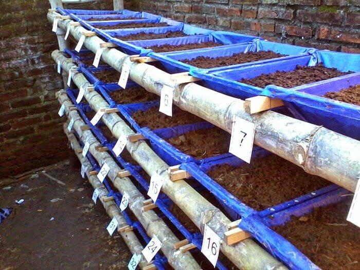 cara praktis ternak cacing tanah
