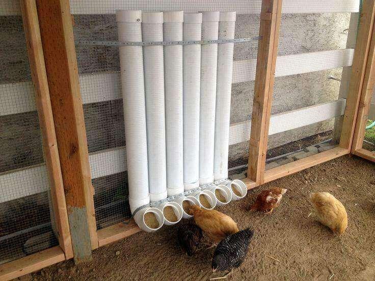 kandang ayam kapas