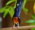 usaha ternak burung