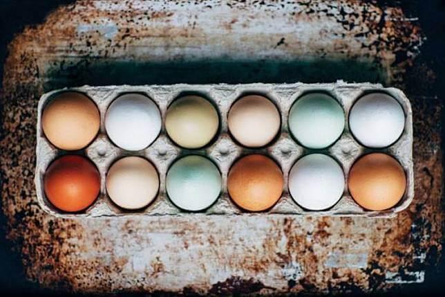 warna ayam telur birma