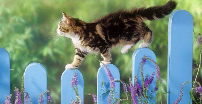 Daftar Harga Kucing Persia Flatnose