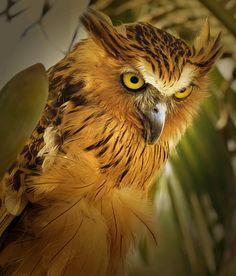Daftar Makanan Burung Hantu