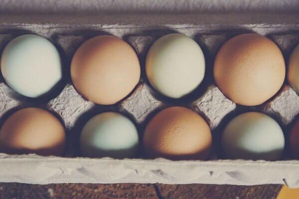 Ciri Telur Ayam Birma