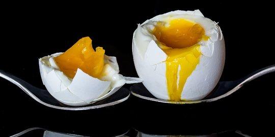 Khasiat Telur Ayam Brahma