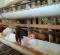 keistimewaan ayam layer modif